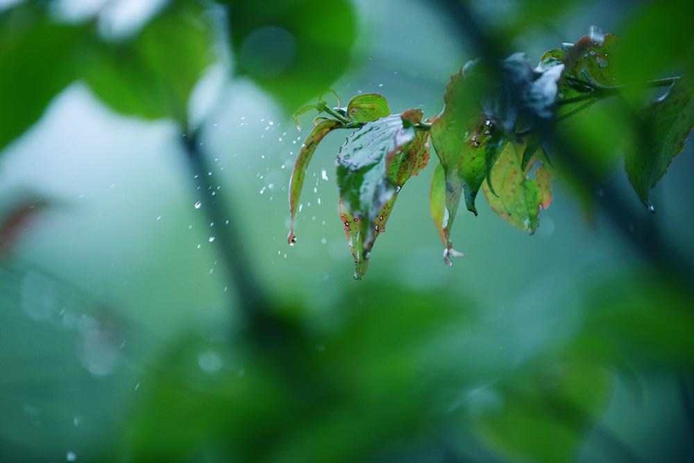 梅雨 雨 レイン