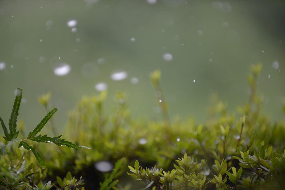 rain,雨,撮影,雨写真