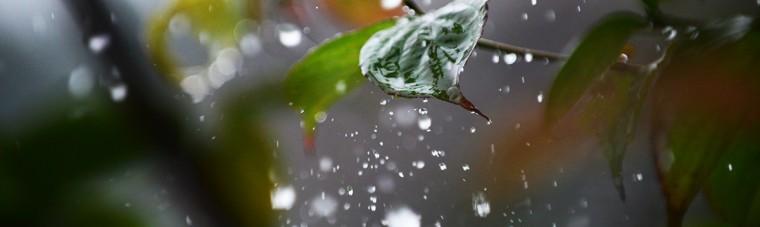 雨 しずく 雫