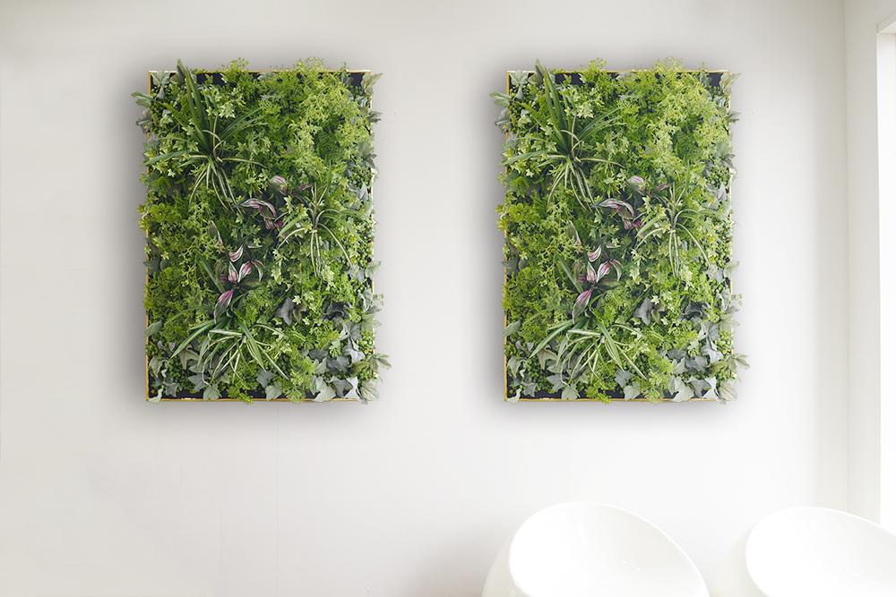 TV番組にもよく使われている壁掛けグリーンウォール